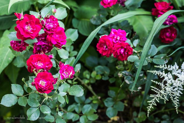 Rosa Champlain Rosa-champlain-130716-71rm