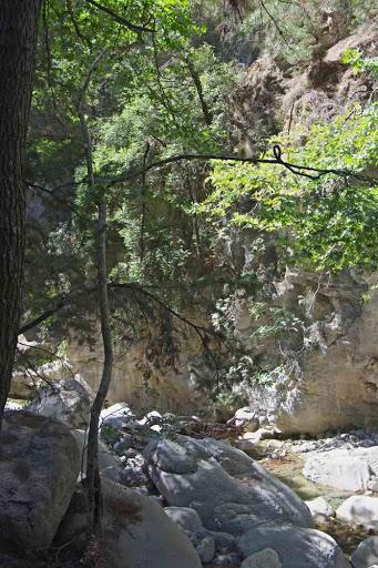 En haut des gorges de Samaria (Φαράγγι Σαμαριάς).