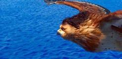 01 Maui en aigle