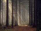 Forest_by_kafik-2013-09-14-15-29.jpg