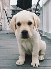 Dog-00003