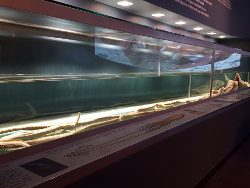 Giant Squid! Newfoundland and Labrador History Comes Alive at The Rooms