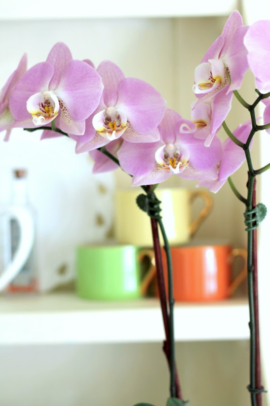 Spring Hutch Orchids