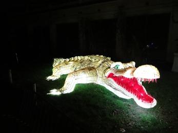 2018.12.03-082 crocodile