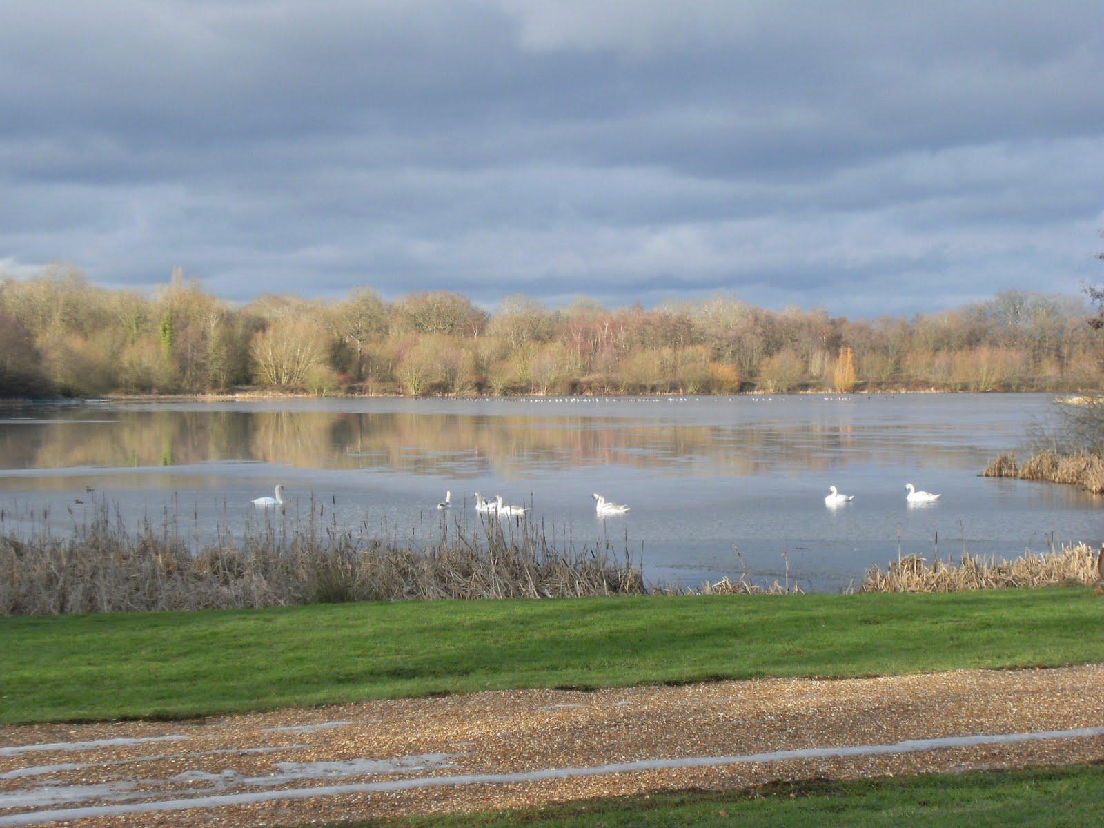 DSCF3003 Dogmersfield Lake
