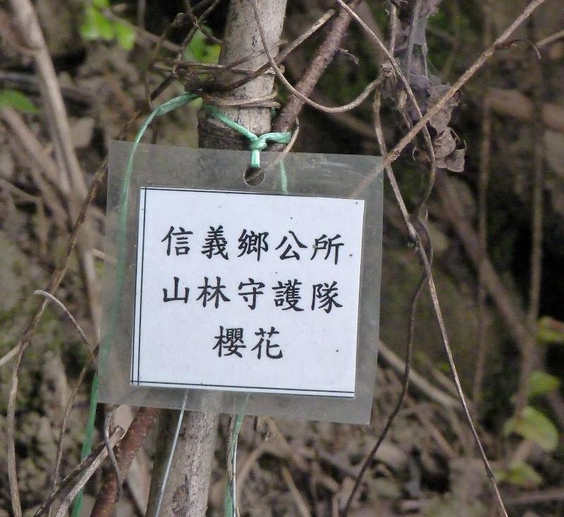 ils ont plantés des centaines d'arbres tous étiquetés