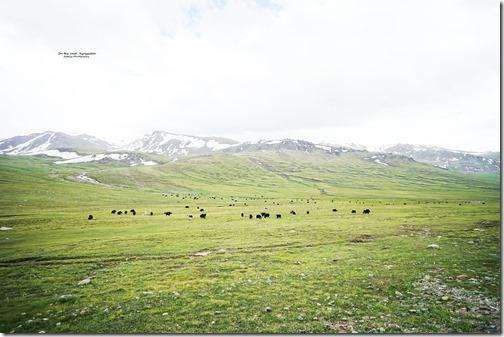 Kyrgyzstan36