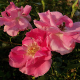 Gardening 2012 - 115_1761.JPG