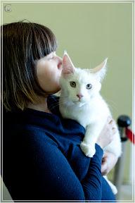 cats-show-25-03-2012-fife-spb-www.coonplanet.ru-012.jpg