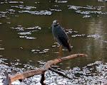 2011 - Brazos Bend State Park 6-19-2011 7-59-00 PM.JPG