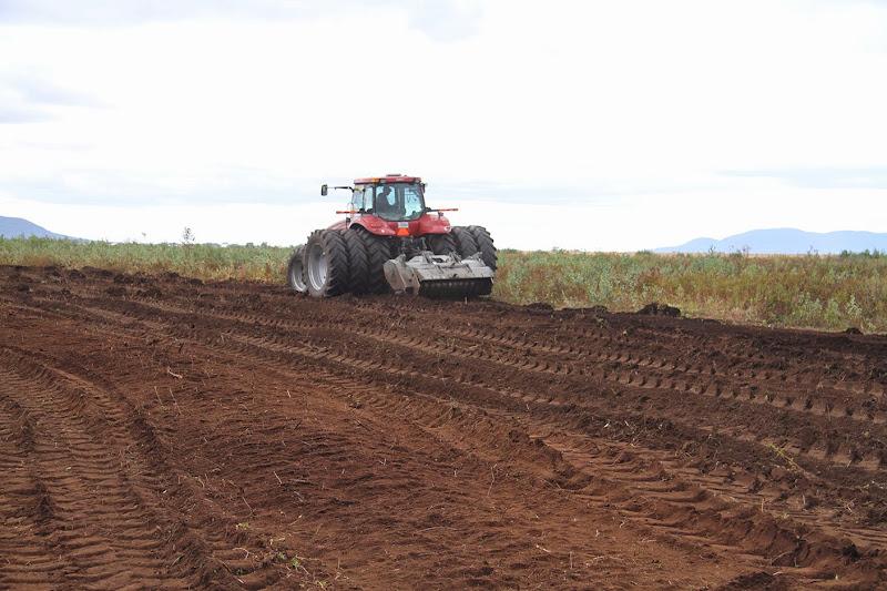 Transformation branchailles en terre agricole - Transformation-de-branchailles-en-terre-agricole-7.jpg