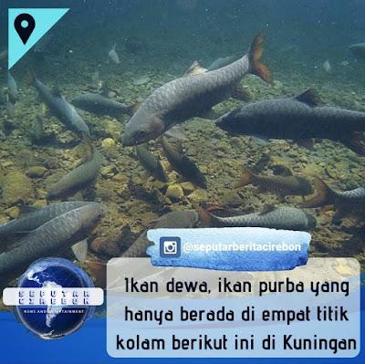 Ikan Dewa cibulan