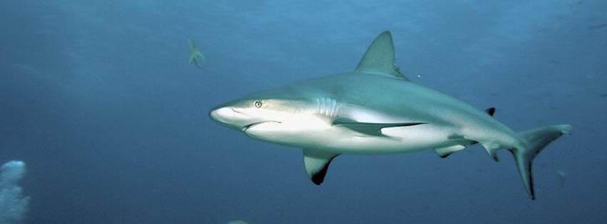 Köpek balığı facebook kapak fotoğrafı