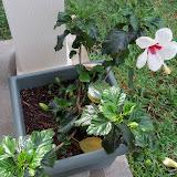 Gardening 2010, Part Two - 101_2307.JPG