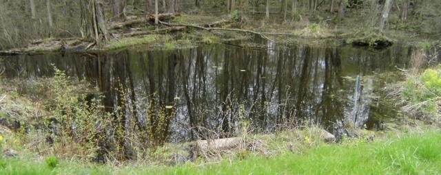 Bäume, Teich, Pflanzen am Rand der Landstraße 370 bei Wolcott, New York State, USA