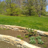 Botanic Garden - IMG_20150507_120643.jpg