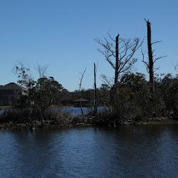Fowl Marsh from Boat Feb3 2013 209