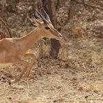 Zambia South Luanga