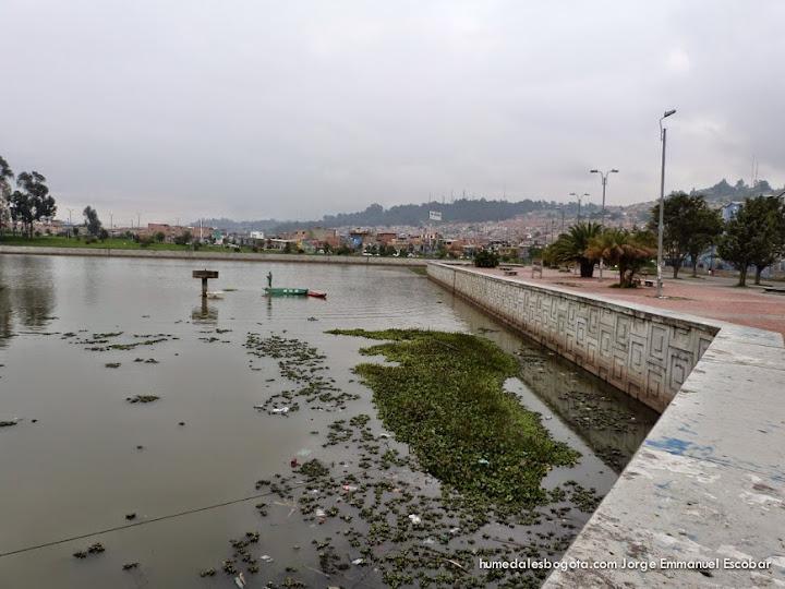 "Humedal Juan Amarillo Tercio alto, ""la piscina"""