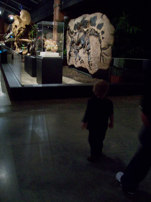 Houston Museum of Natural Science, Sugar Land - 114_6697.JPG