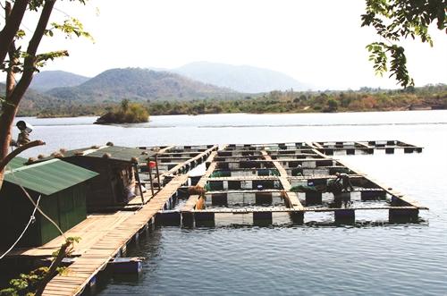 Kỹ thuật, kinh nghiệm nuôi cá tầm - 570615b715ed2