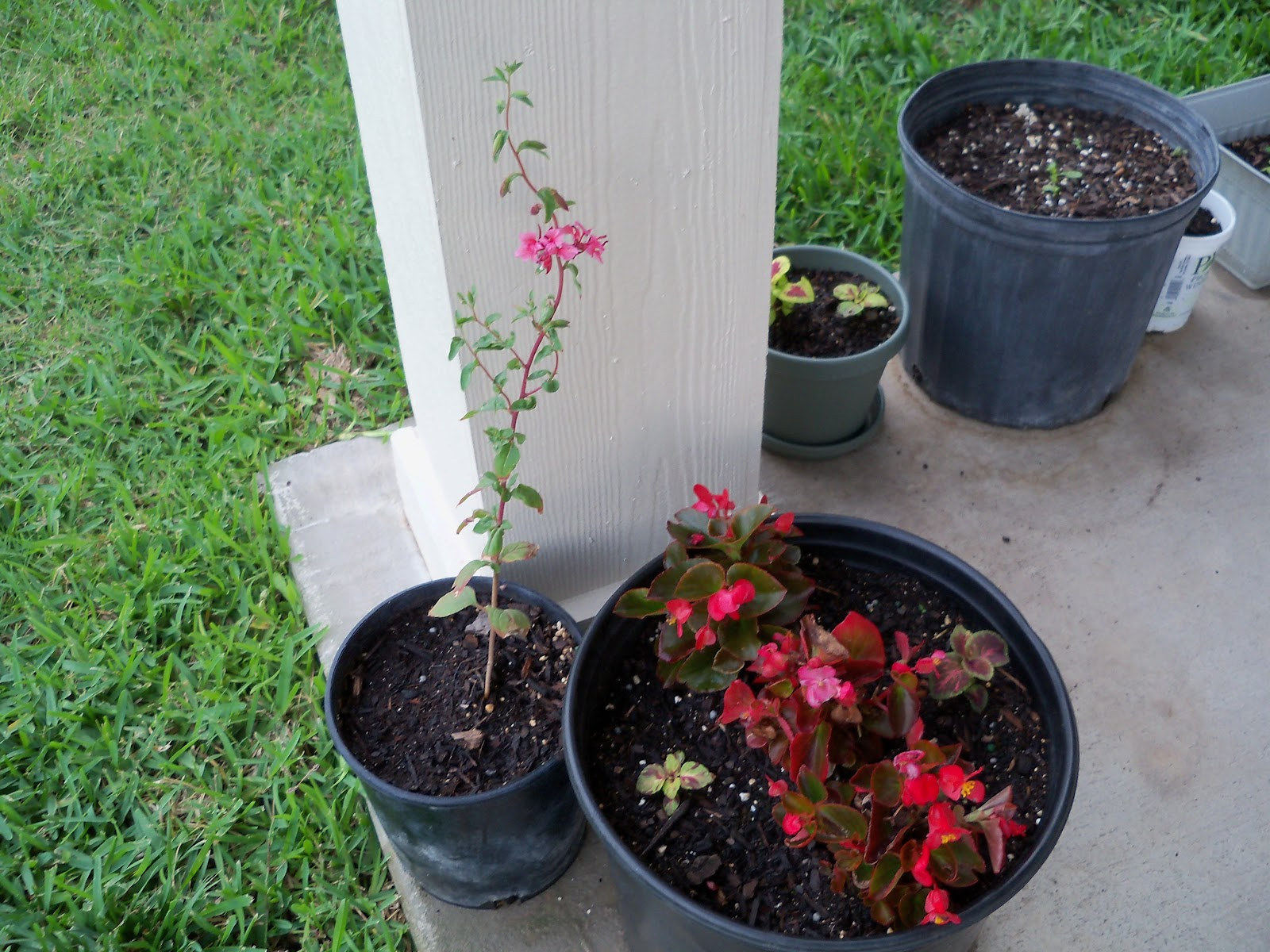 Gardening 2010, Part Two - 101_2457.JPG
