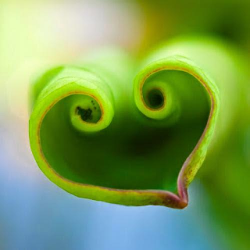 Awakening The Lotus Heart Via Emmanuel Dagher