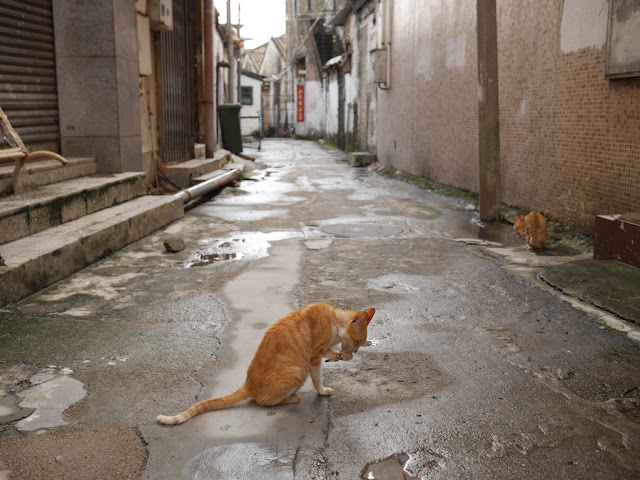 two cats licking their paws after a meal in a Zhongshan alley