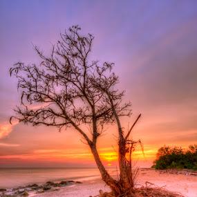 Pokok Nan Sebatang (The Tree) by SyaFiq Sha'Rani - Landscapes Waterscapes ( tree, sunset, beach, stranded waterscape )