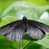 007-vlinder_3.jpg