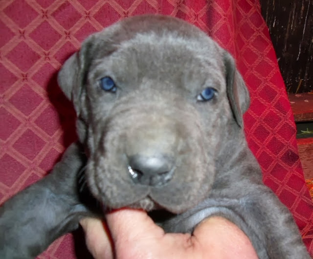 Beth & Cesar's blue girl @ 4 weeks