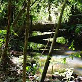 Autre biotope guyanais de Parides sesostris sesostris : Crique Cochon, Saül, 17 novembre 2012. Photo : J.-M. Gayman