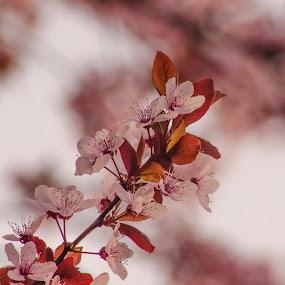 SPRING by Alexandru Bogdan Grigore - Flowers Flowers in the Wild ( spring flowers, springtime, nature, tree, trees )