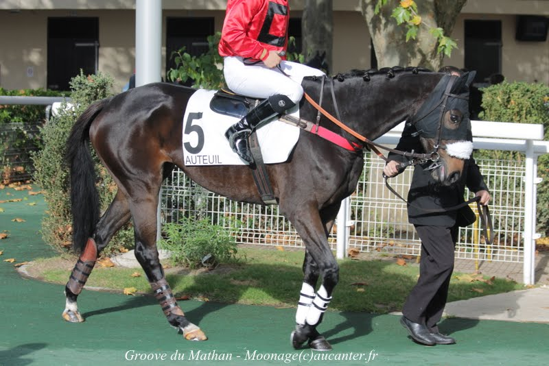 Photos Auteuil 2-11-2014 (48h de l'obstacle) IMG_5190