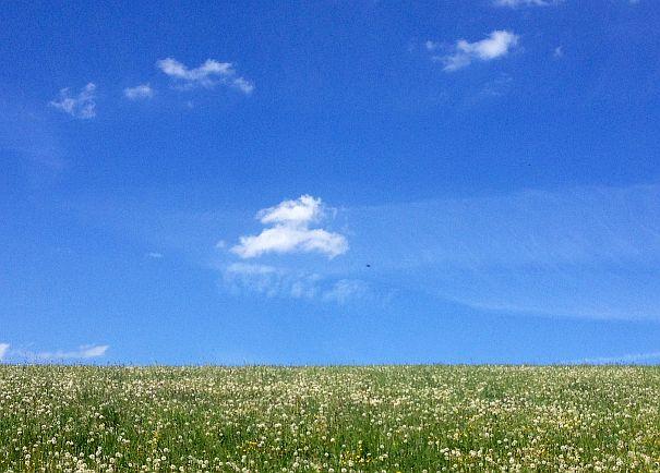 Wolken über Blumenwiese im Westerwald
