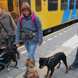 KNON-honden in Emmen - DSC_0780.JPG