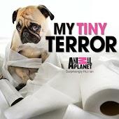 My Tiny Terror