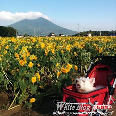 16-09-02-15-52-21-000_photo.jpg