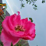 Gardening 2014 - 116_2612.JPG