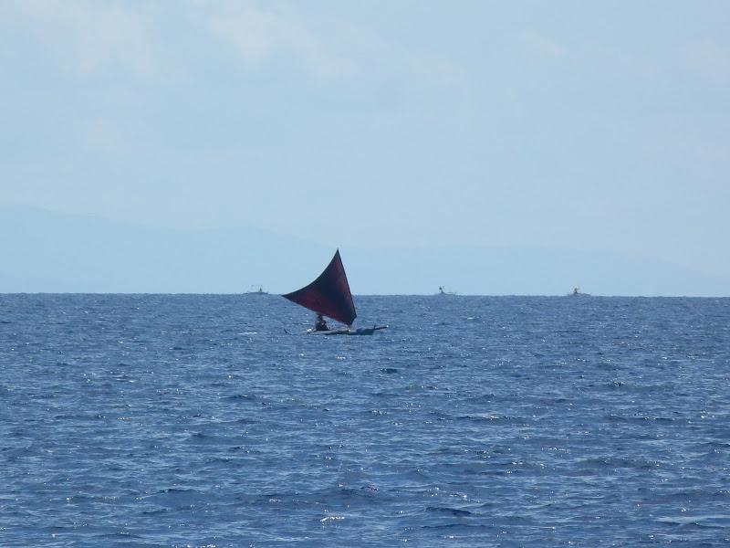 Dauin, Dumaguete, APO Island (Negros) - philippines%2Bdeux%2B586.JPG