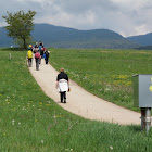 29 aprile - 1 maggio 2011 Cammino Jacopeo d'Anaunia - 3^ Giornata Nazionale dei Cammini Francigeni
