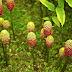 Tanaman Lokal Herbal Kaya Manfaat Yang Jarang Diketahui