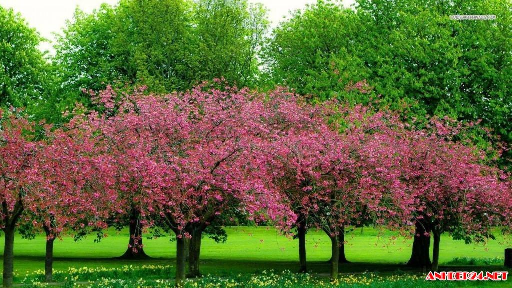 Tuyển Tập Những Hình Ảnh Ấn Tượng Về Mùa Xuân