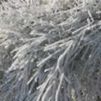 tn_lachaux-2010-12-37.jpg