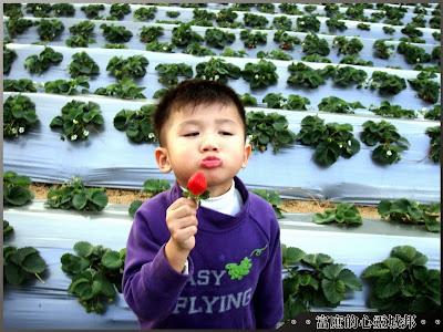 與大湖草莓之吻