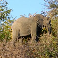 Botswana_May_June_2012