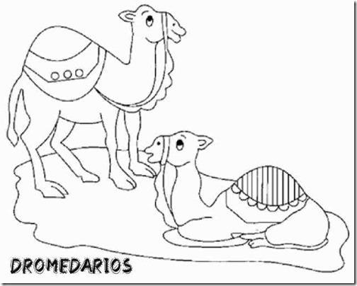 00 dromedario 3 1 (3)