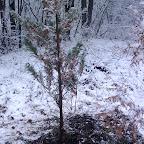Зимняя уборка в Дендрарии 018.jpg