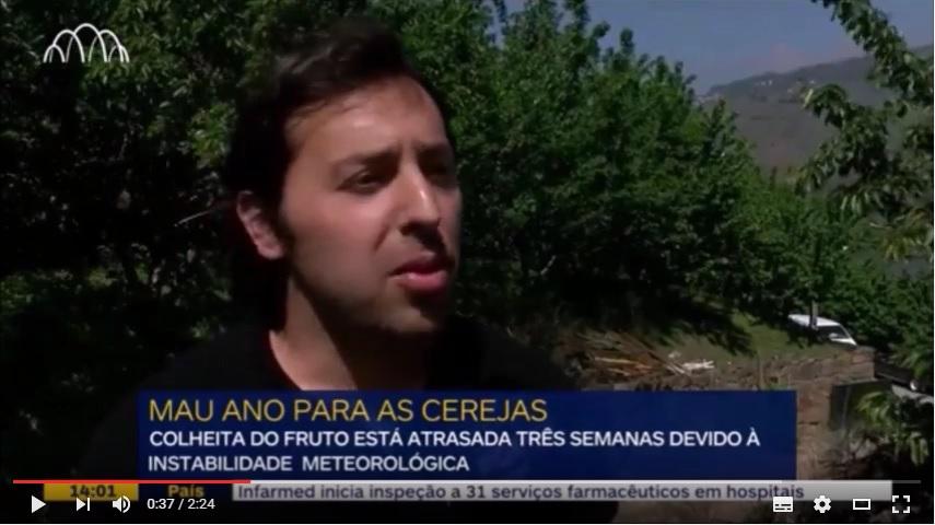 Reportagem Porto Canal sobre a Cereja da Penajóia - 2016