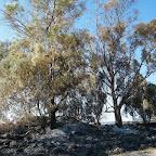 השריפה בסוסיתא-היפוס Hippos 25-8-11